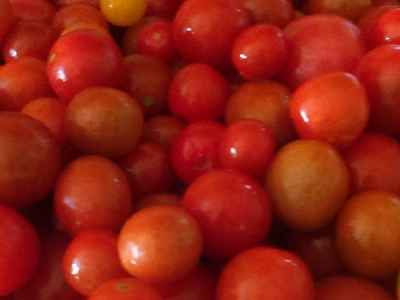 Beautiful fresh tasty cherry tomatoes from the farm