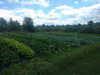 Wide, raised beds help to produce micro climate which keeps plants strong and healthy.